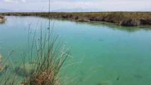 rio-mezquites-cuatrociénegas
